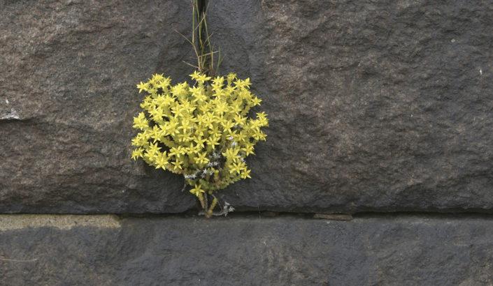 Flowers in a rock