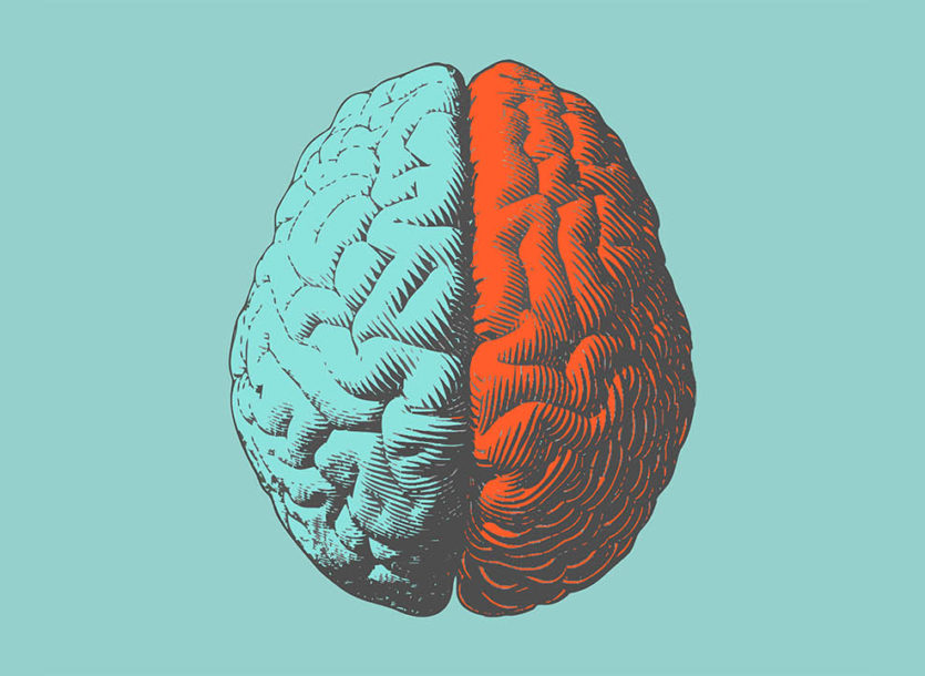 Grades K-3 students learn about the three parts of the brain that are involved with emotion regulation, attention, and learning.